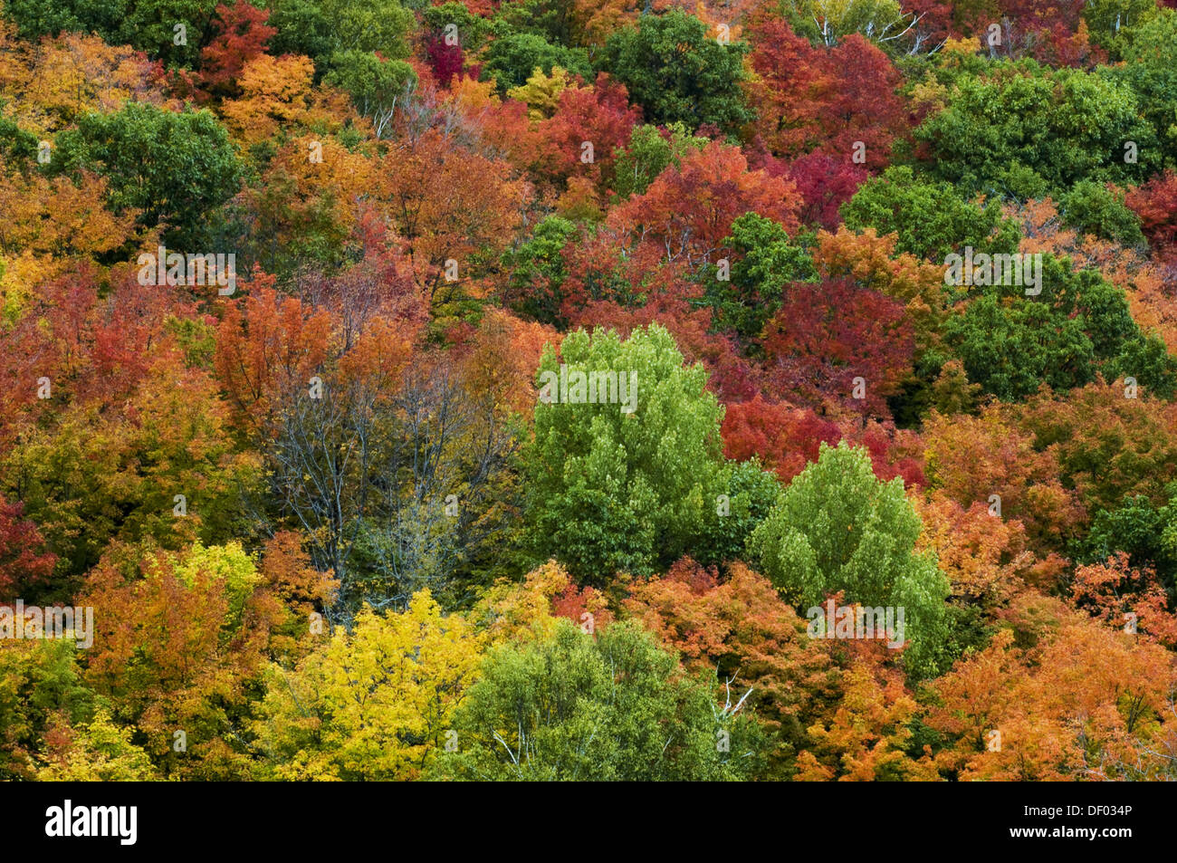 an overview of the deciduous forest Introduction: the temperate broadleaf deciduous forest (tbdf)–especially in  eastern north america, where is remains most intact–is known for the turning of.