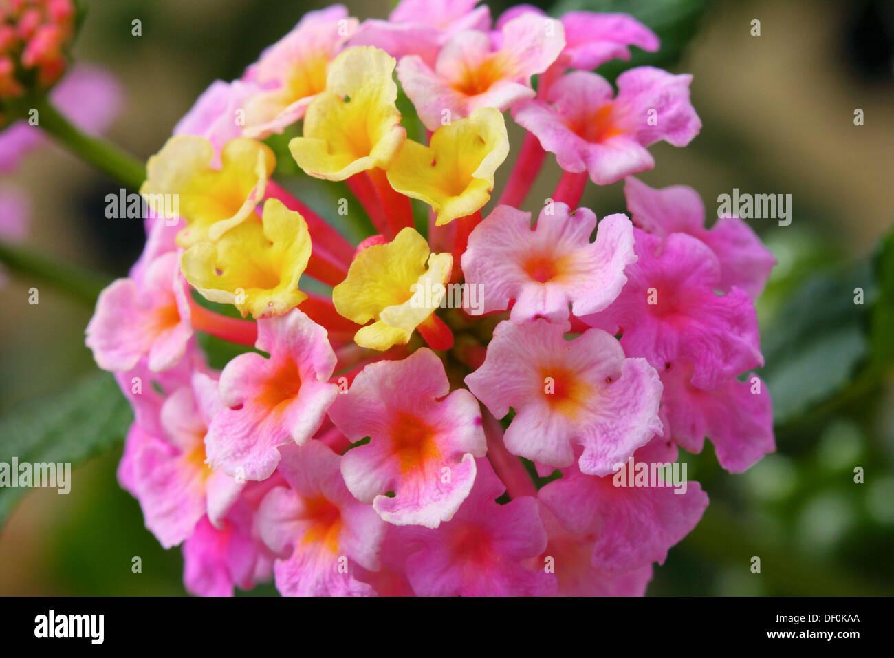 Racimo de flores de la planta de jard n bandera o for Banderas decorativas para jardin