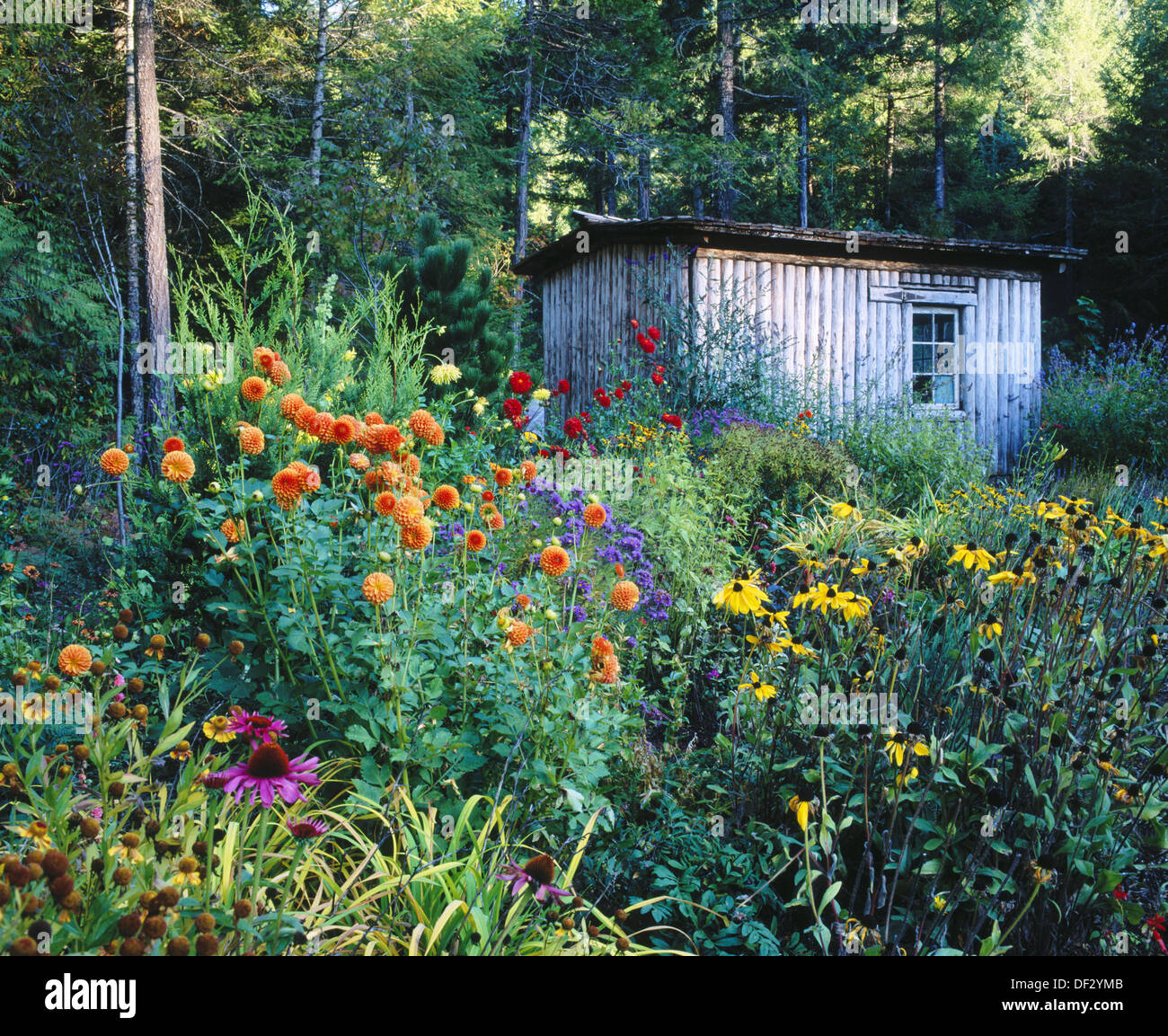 flowerbed and garden shed lane county oregon usa