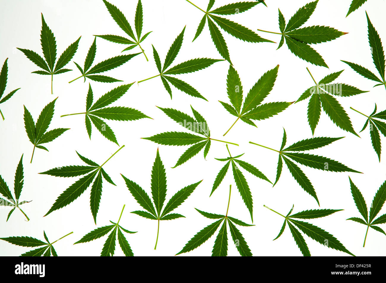 how to make weed from leaves