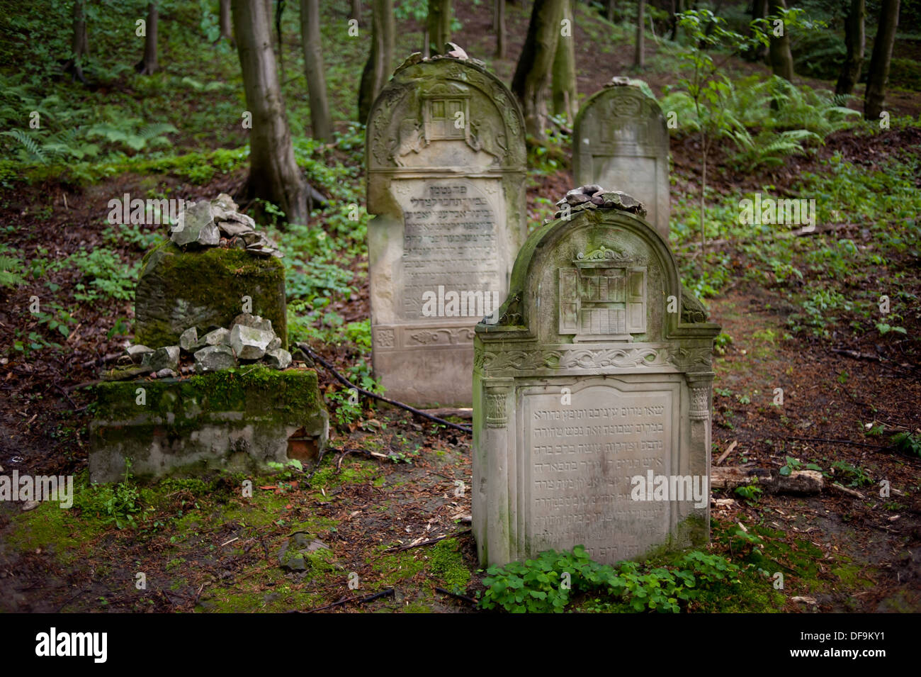 cemetery in the forest - photo #28