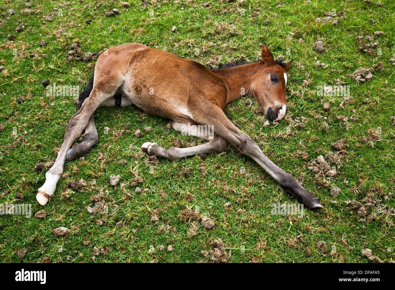 baby born horse instructions