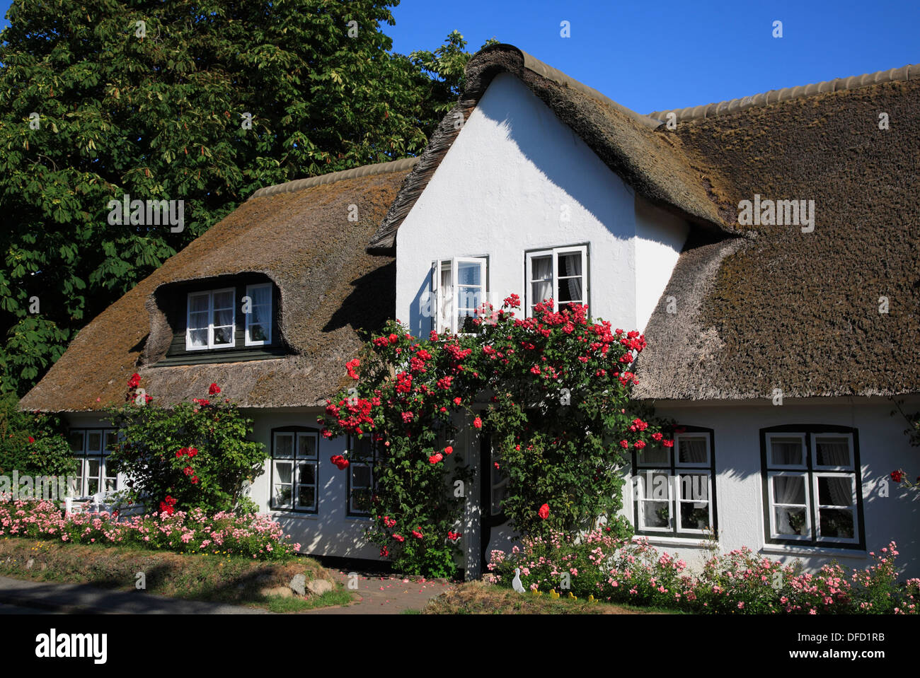 thatched old frisian house in keitum sylt island stock photo royalty free image 61137759 alamy. Black Bedroom Furniture Sets. Home Design Ideas