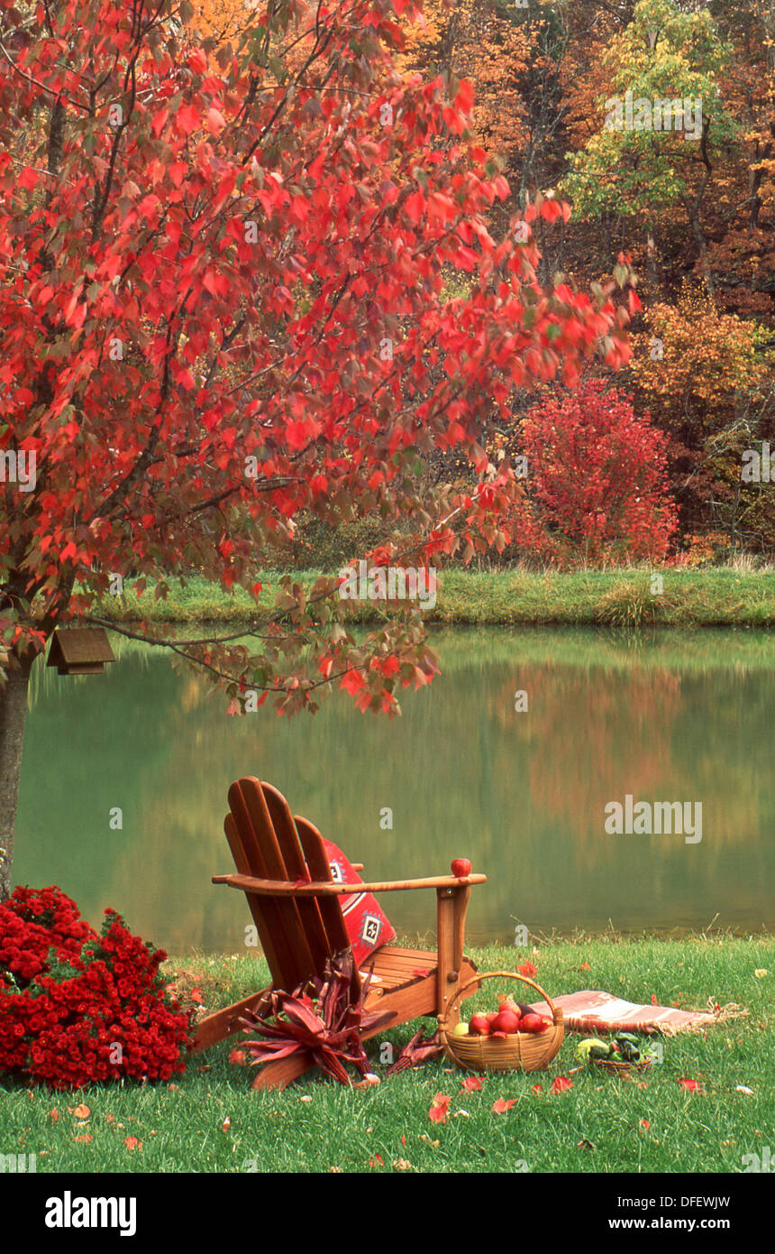 Adirondack Chair Under Fall Maple Tree With A Basket Of