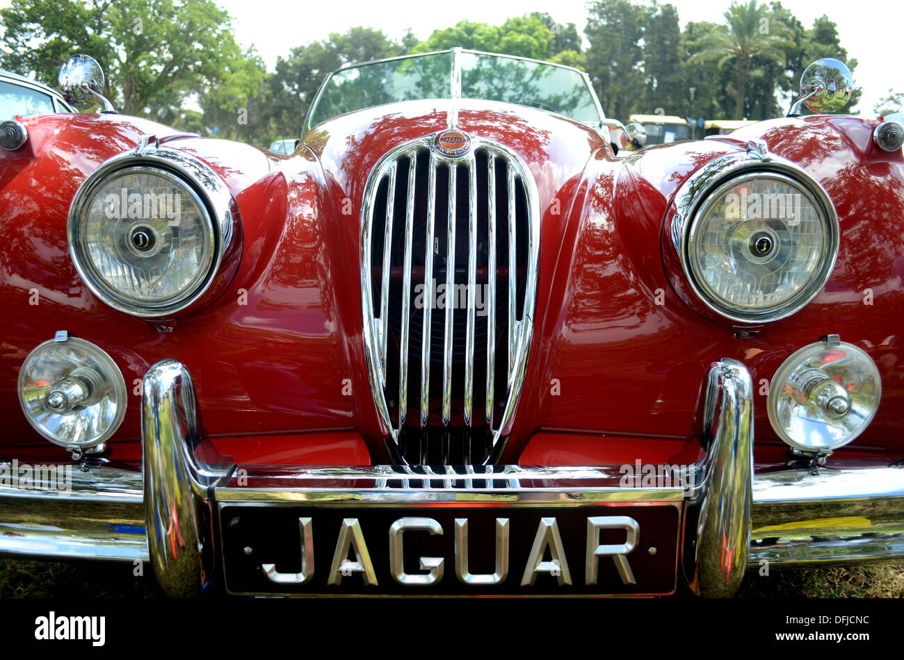 Jaguar classic car logo stock photo royalty free image 61256088 jaguar classic car logo buycottarizona