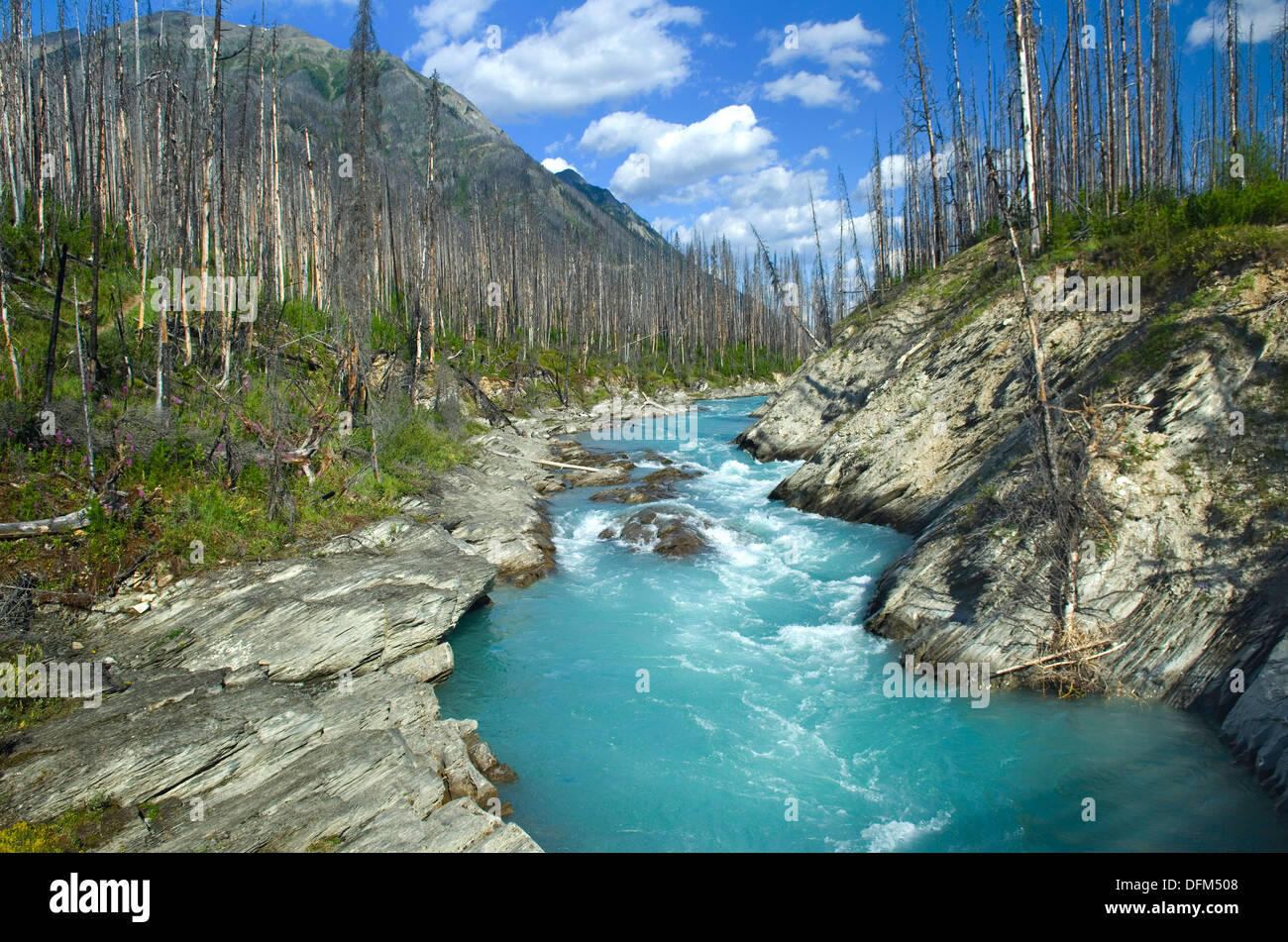 Vermilion river kootenay national park british columbia canada vermilion river kootenay national park british columbia canada sciox Image collections