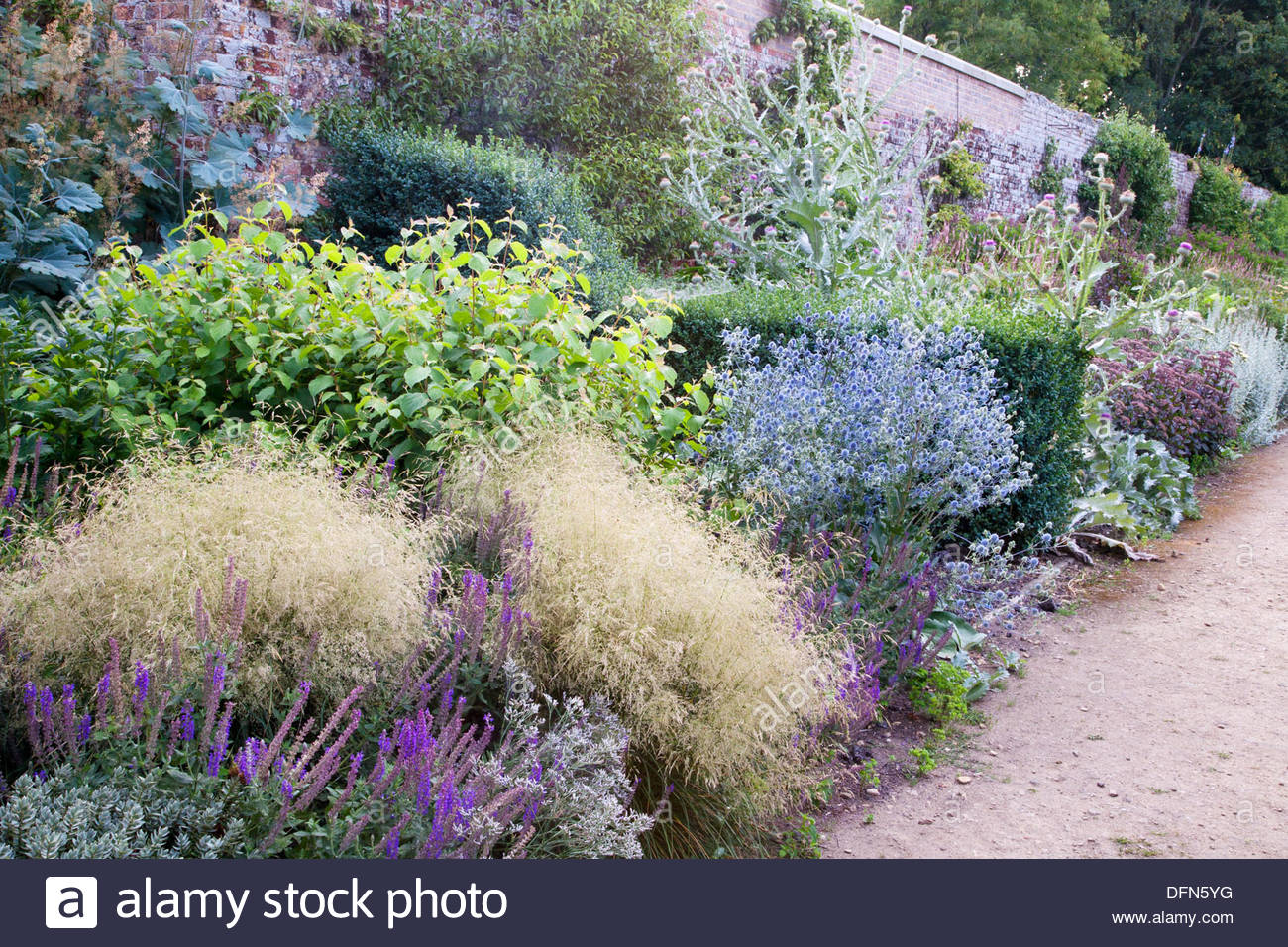 July border including ornamental grasses sedum eryngium for Small ornamental grasses for borders