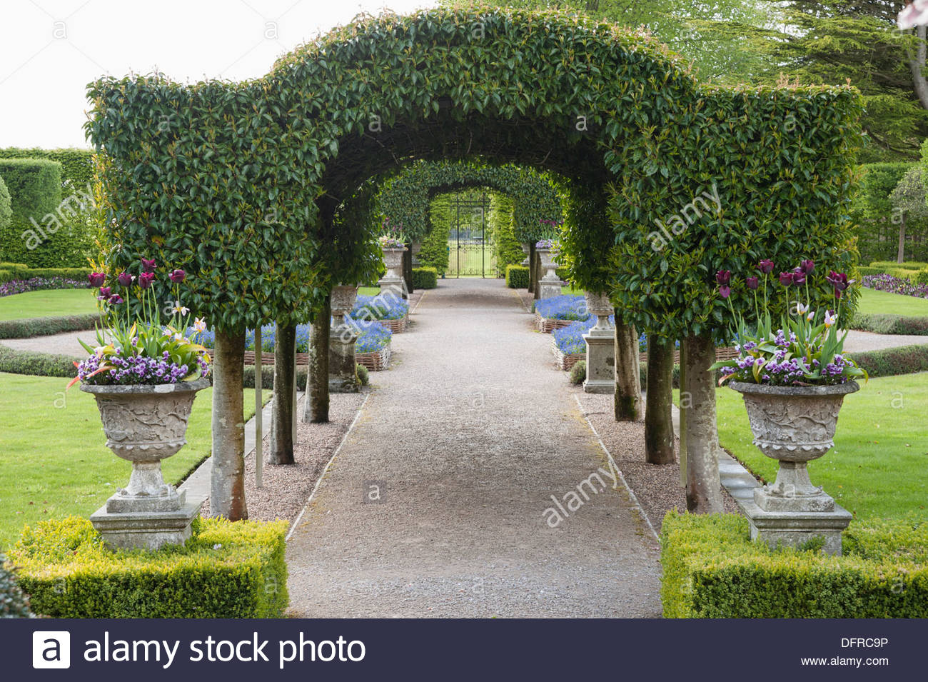 laurel tunnel stock photos laurel tunnel stock images alamy the summer garden central archway of portugese laurel framed urns set into clipped box