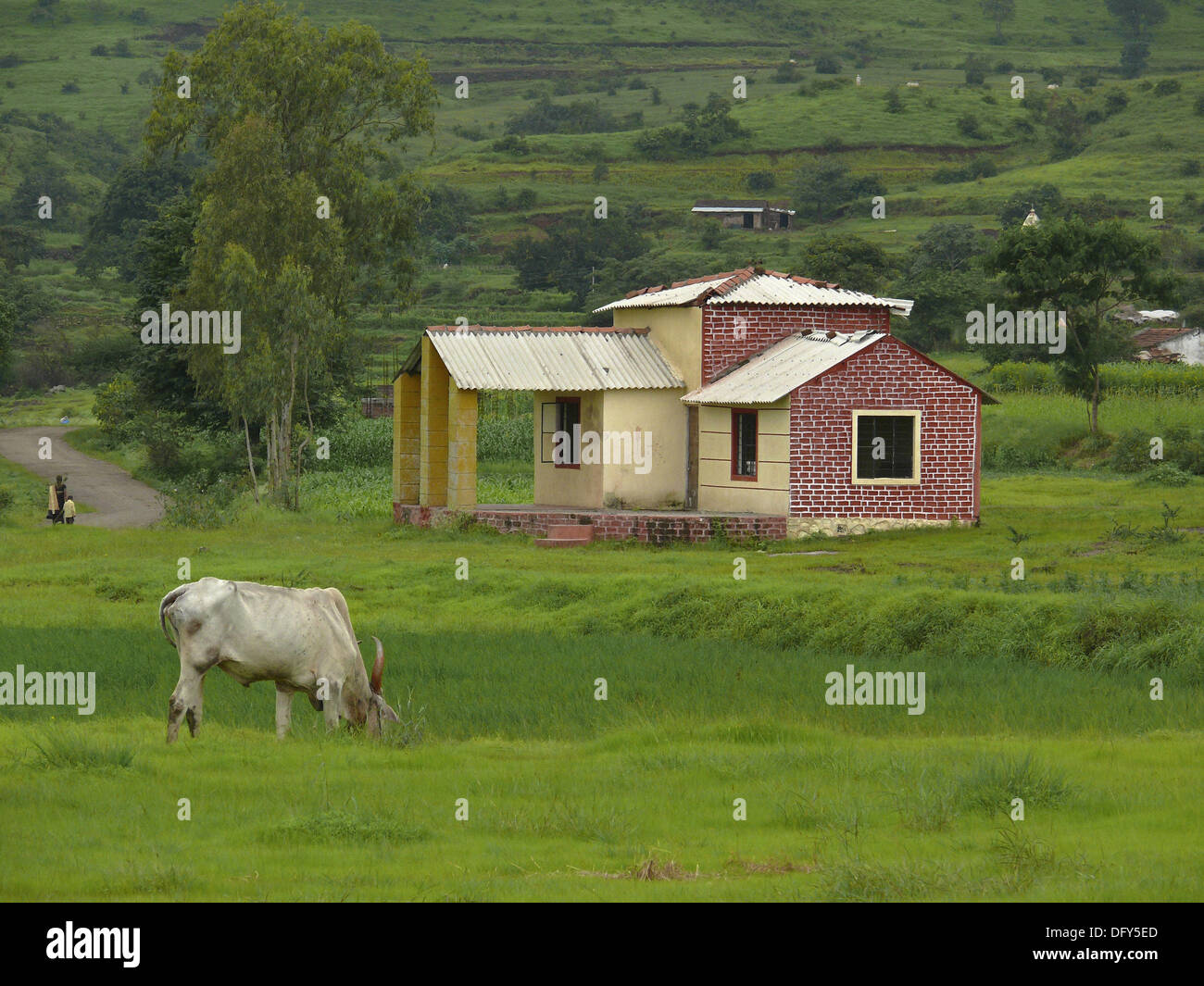 A cow is eating grass in front of a small farm house for Pictures of small farm houses