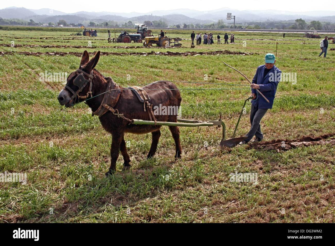 donkey with a plow agricultural work stock photo royalty free image 61551618 alamy. Black Bedroom Furniture Sets. Home Design Ideas