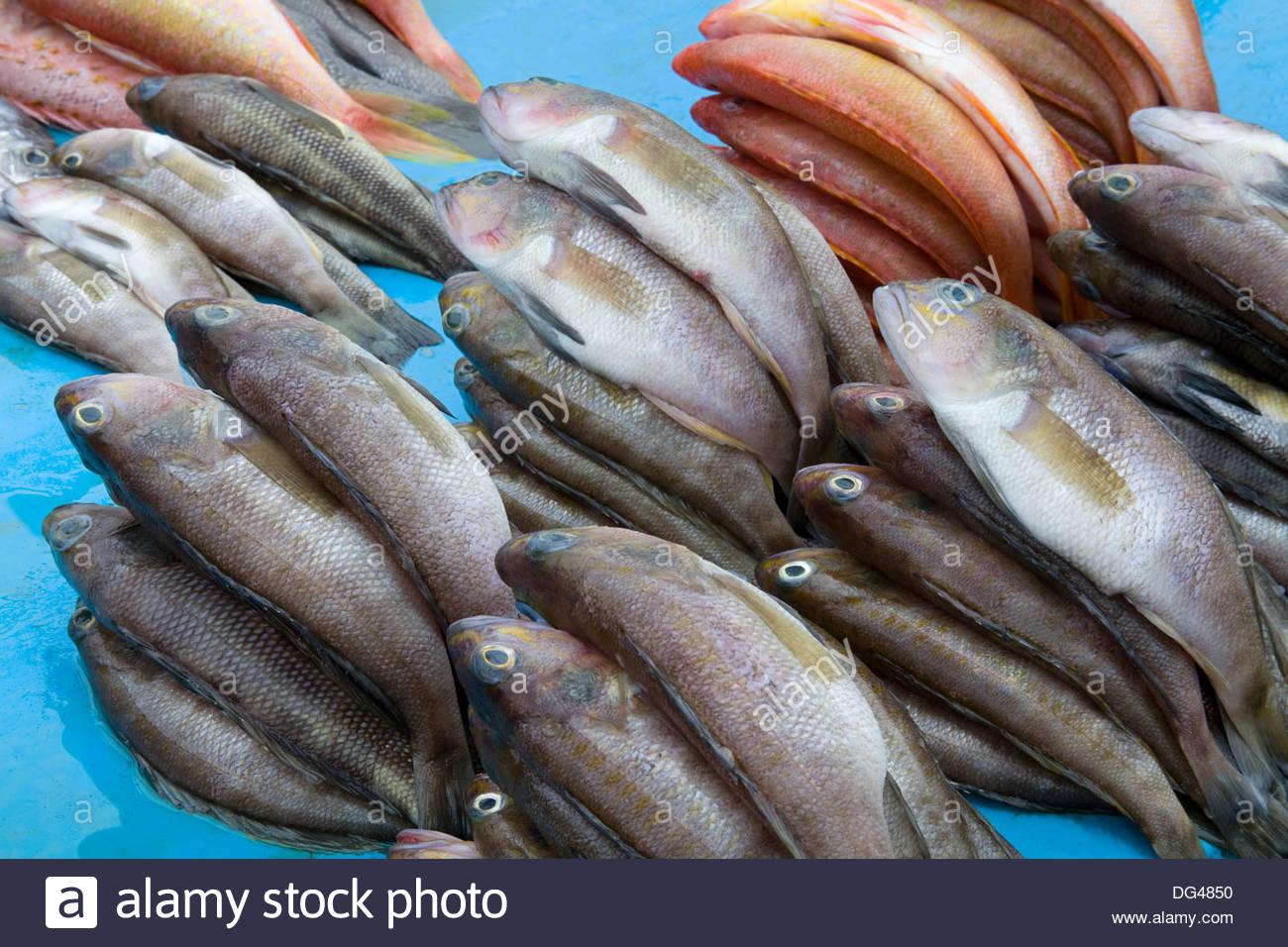 Fish market on tarqui beach city of manta ecuador south for Fishing in ecuador