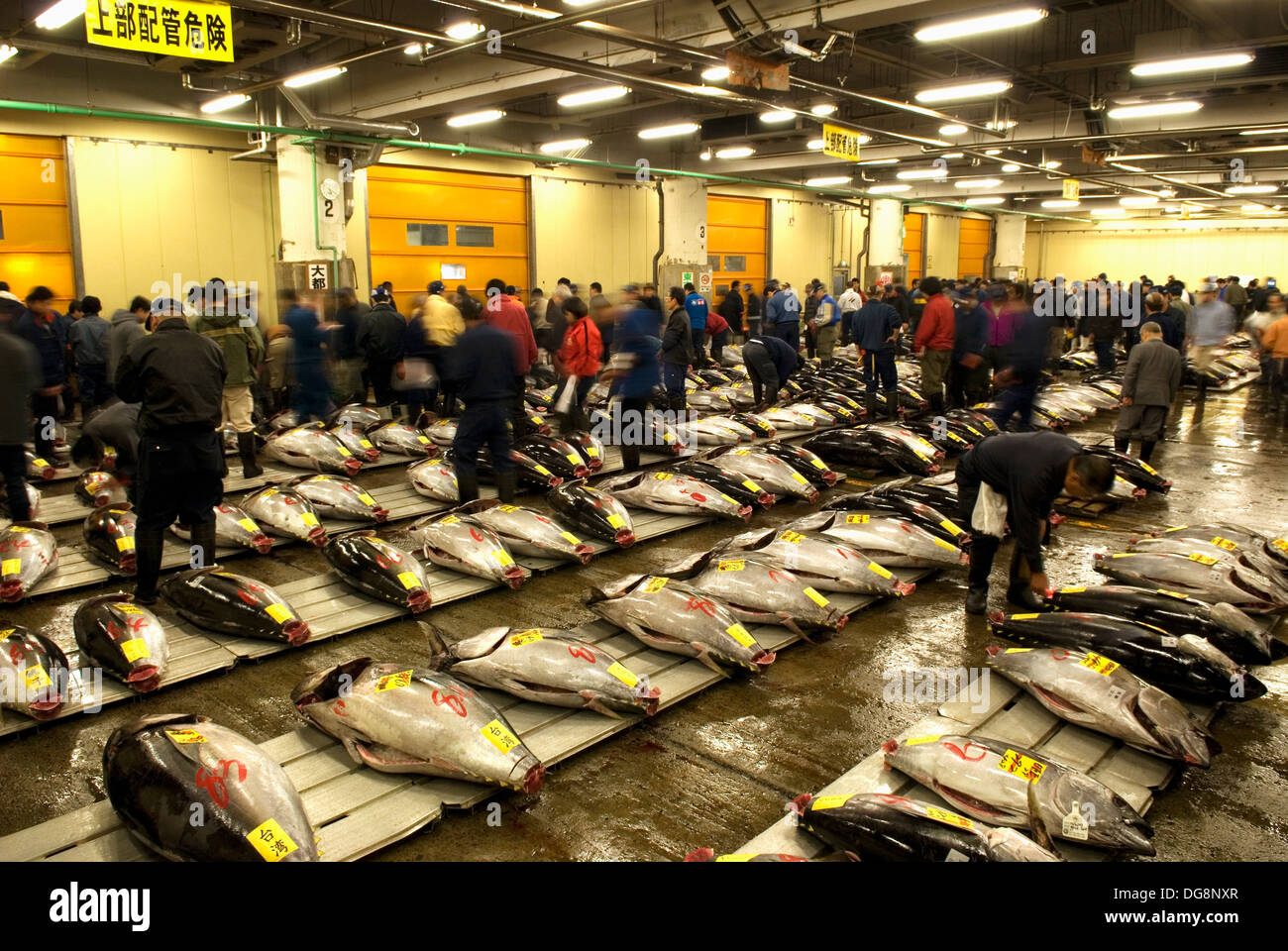 Stock Photo Tuna At Tsukiji Fish And Seafood Market The Biggest Wholesale Fish Market Over The World Tokyo Japan