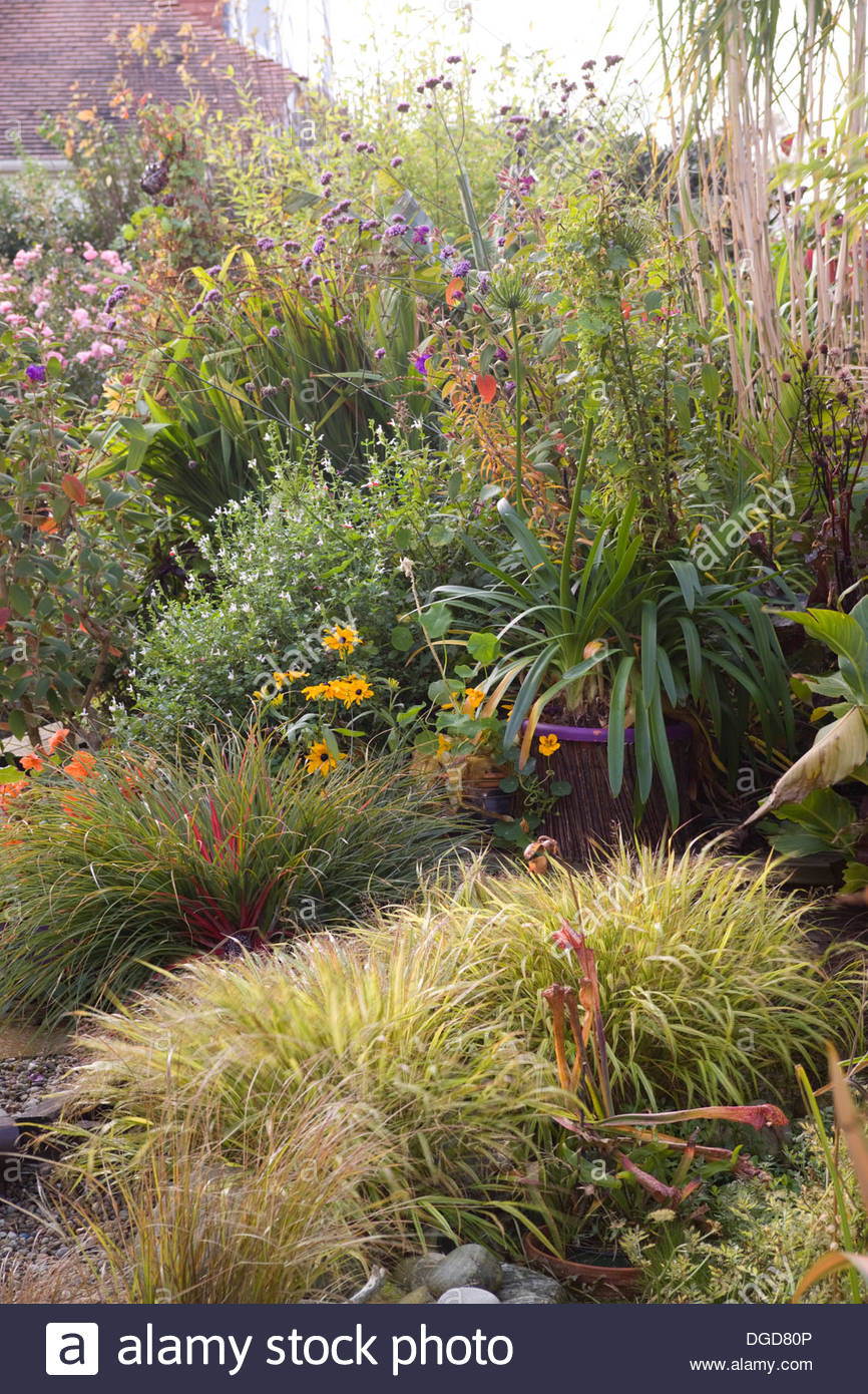 Suburban garden in autumn with large borders of ornamental for Small ornamental grasses for borders
