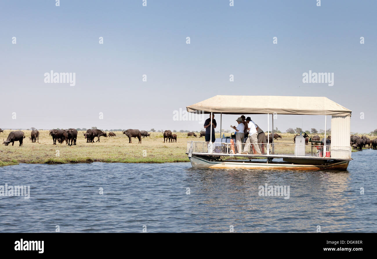 Tourists On A Chobe River Cruise Safari Looking At A Herd Of - Chobe river