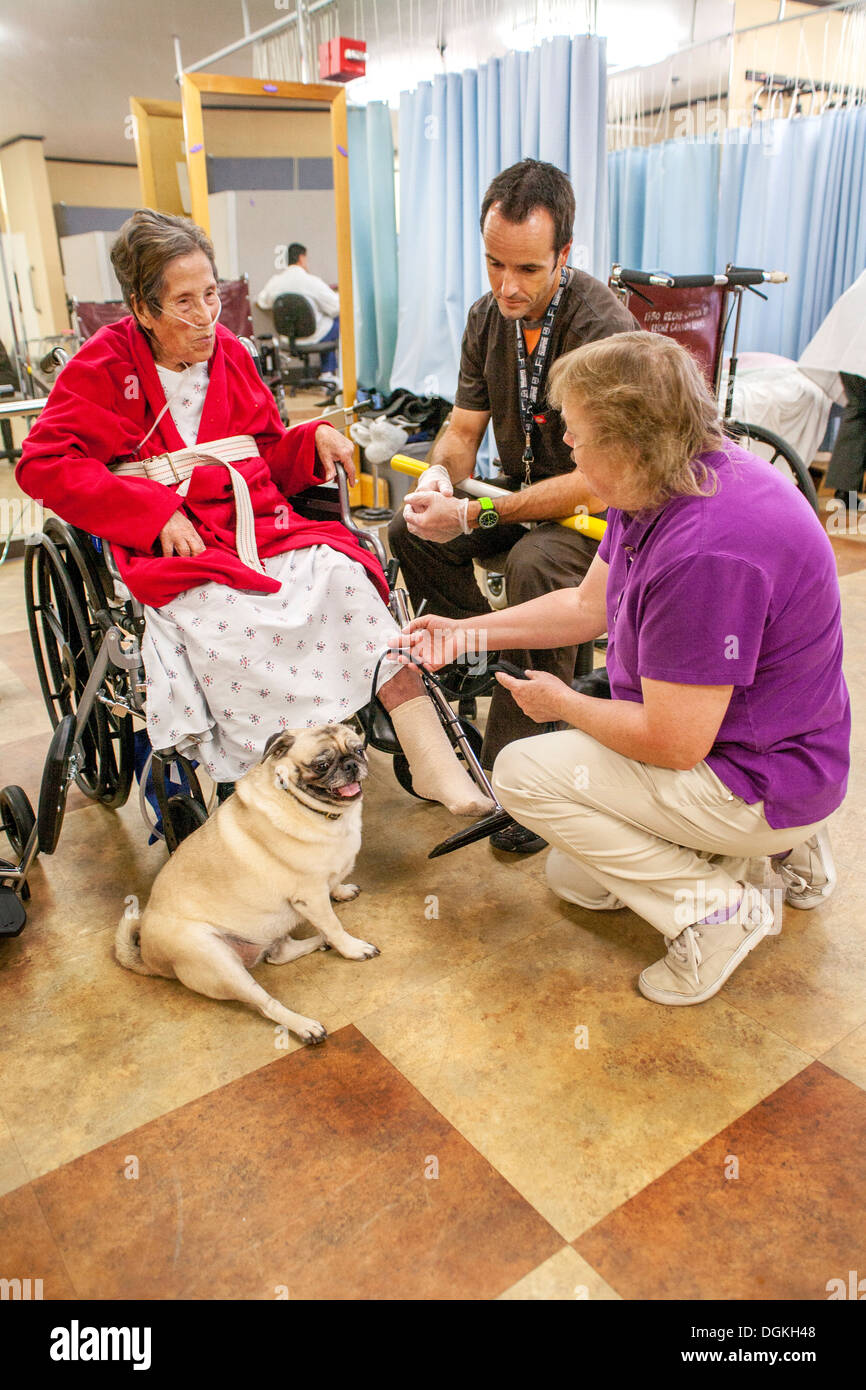 California physical therapy -  Elderly Hispanic Wheelchair Patient In The Physical Therapy Room Of California Rehabilitation Clinic Greets A Pug