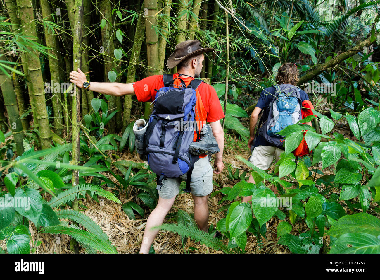 tourists during jungle trekking hike guadeloupe national park stock photo royalty free image. Black Bedroom Furniture Sets. Home Design Ideas