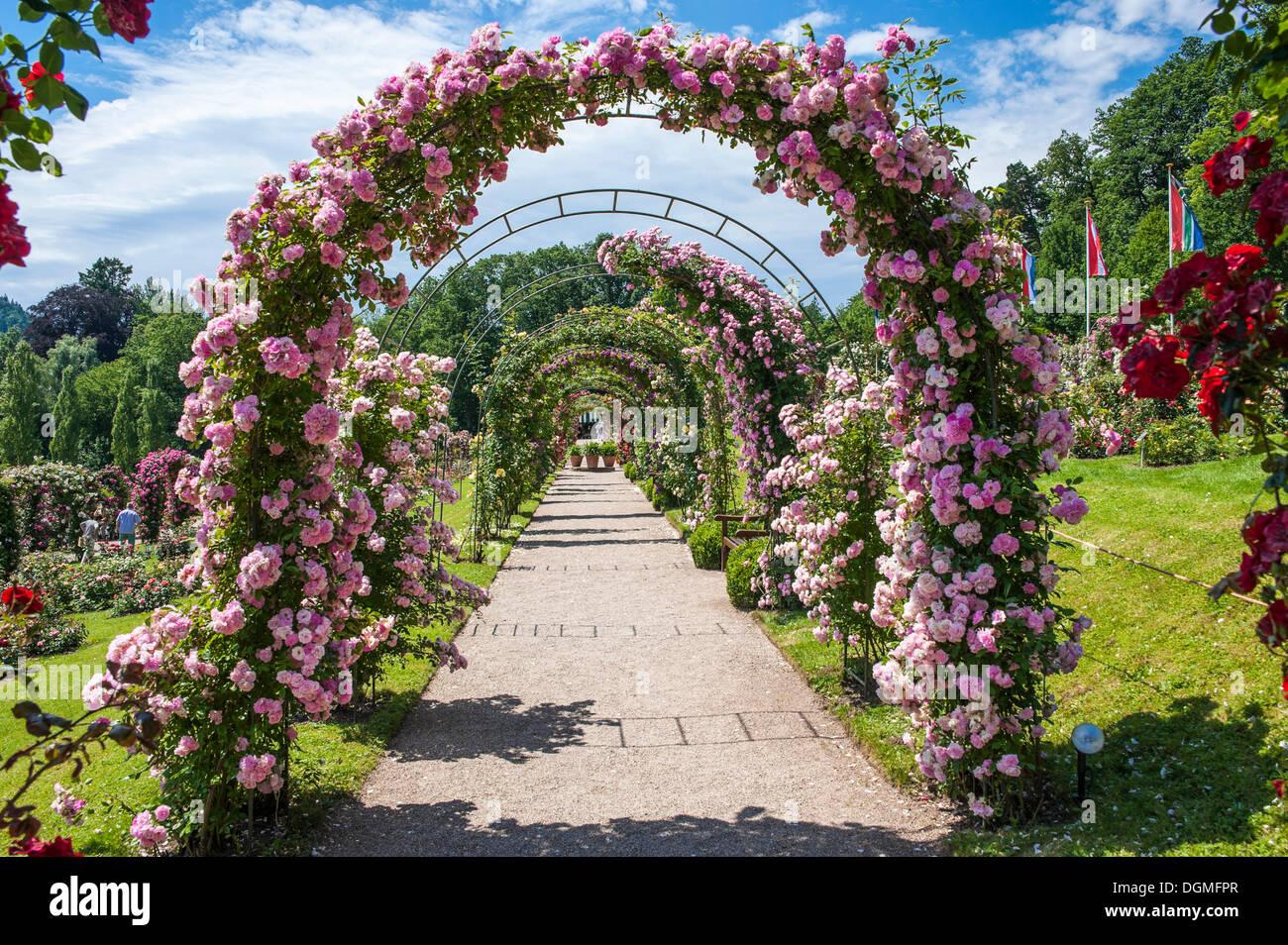 rose arches   rose garden rosenneuheitengarten
