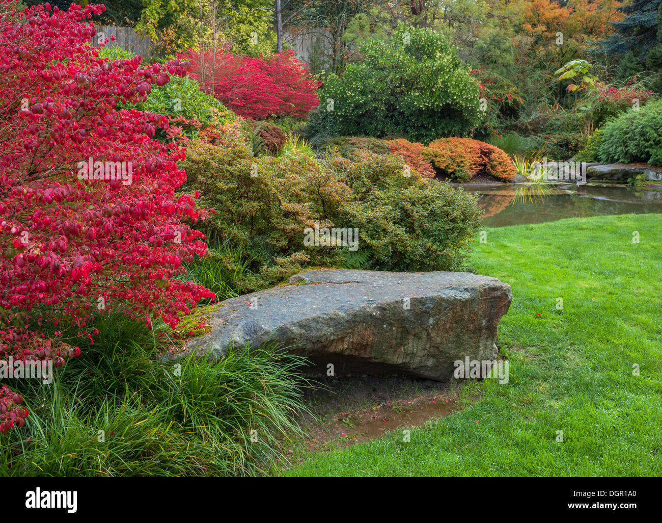 Kubota Gardens Seattle WA Vibrant red autumn leaves of burning