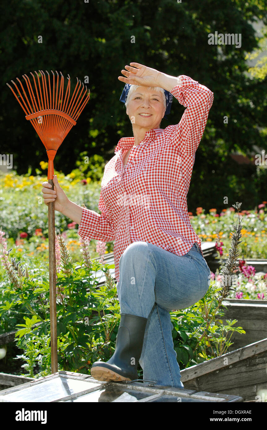 Elderly Woman, Gray Haired, 55 65, Wearing Gardening Clothes While Working  With The Cold Frame Of A Raised Bed In A Garden