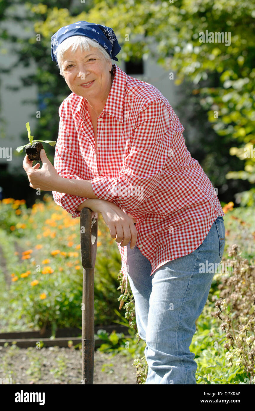 Elderly Woman, Gray Haired, 55 65, Wearing Gardening Clothes And Leaning  Against A Spade While Holding A Salad Seedling In A