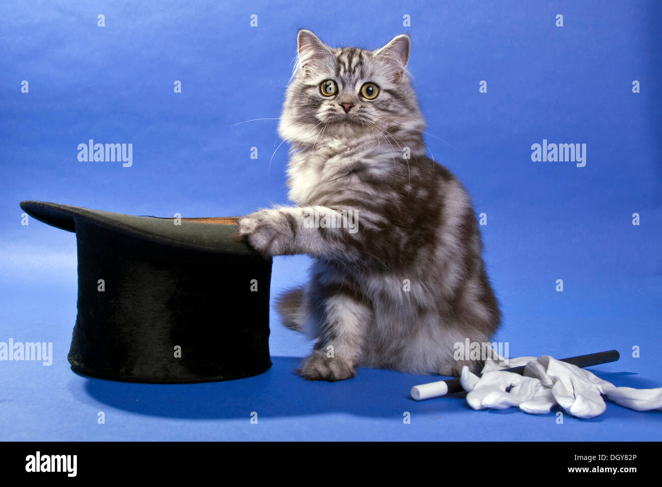 Image result for cat magician