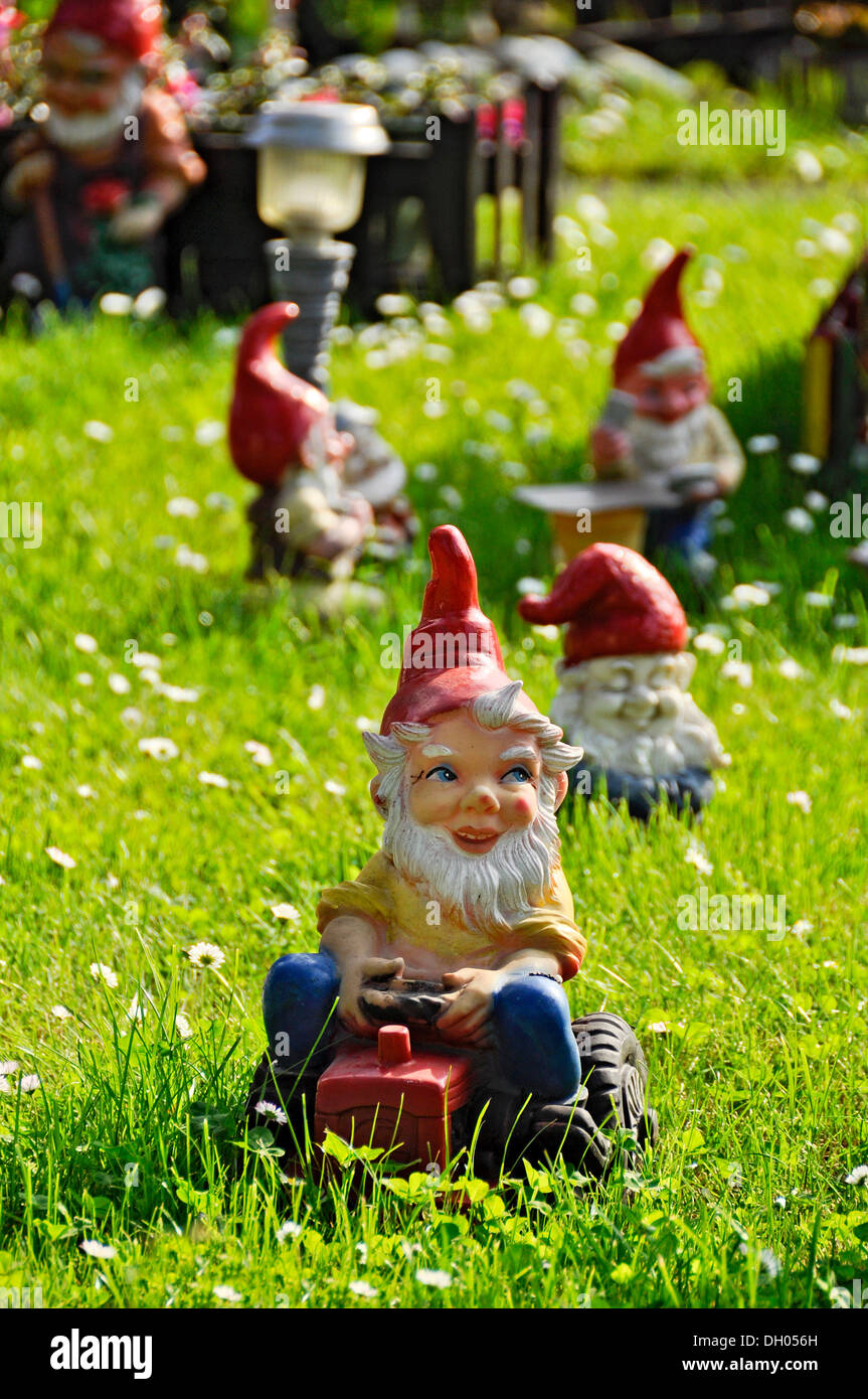 Garden gnomes garden gnome driving a tractor on a lawn Bueches