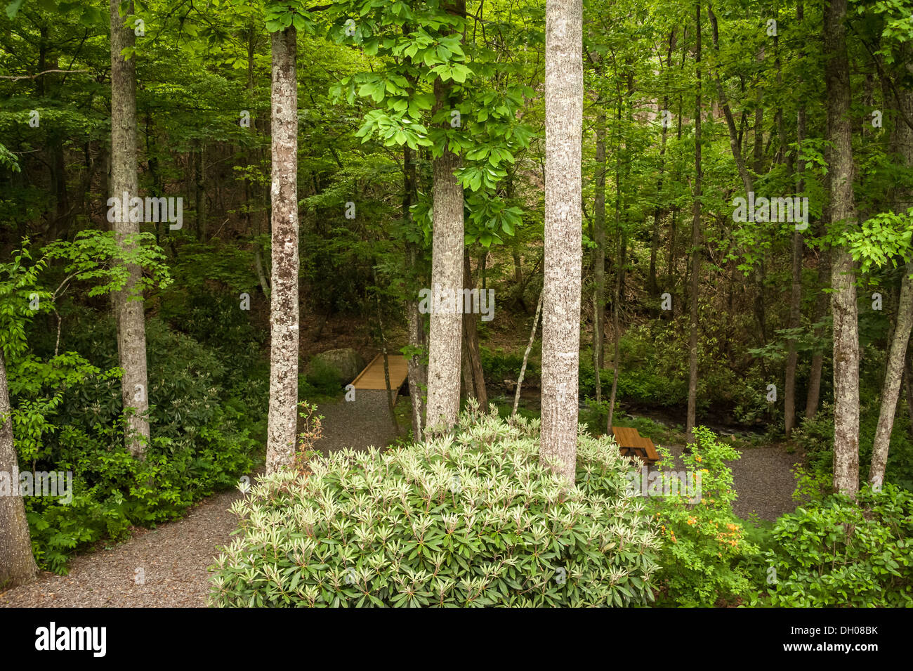 view from the deck of a lush wooded backyard with creek picnic