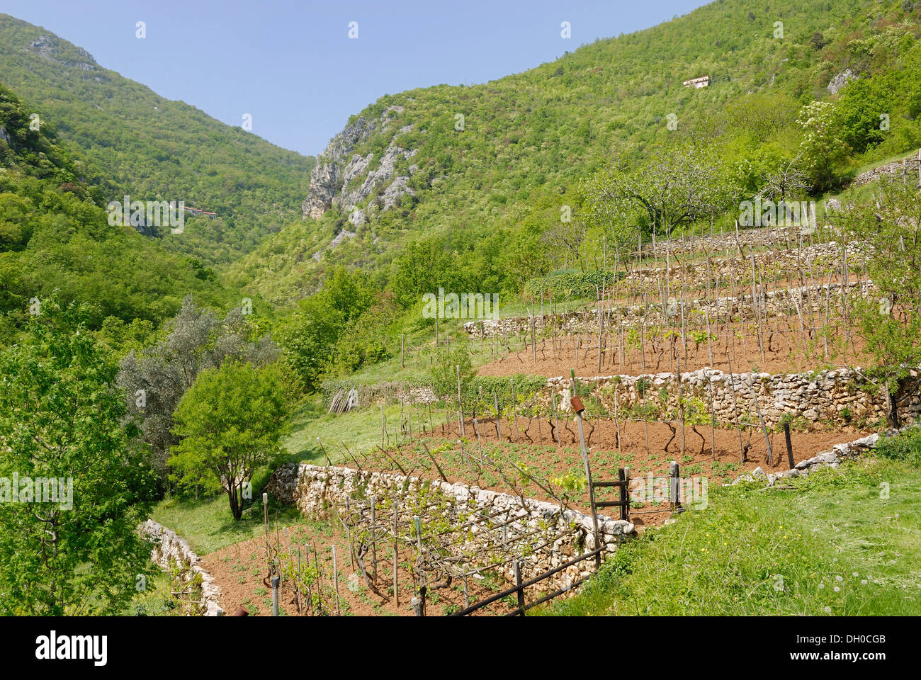 Mediterranean terrace garden on the hillside vines and - How to terrace a hillside ...