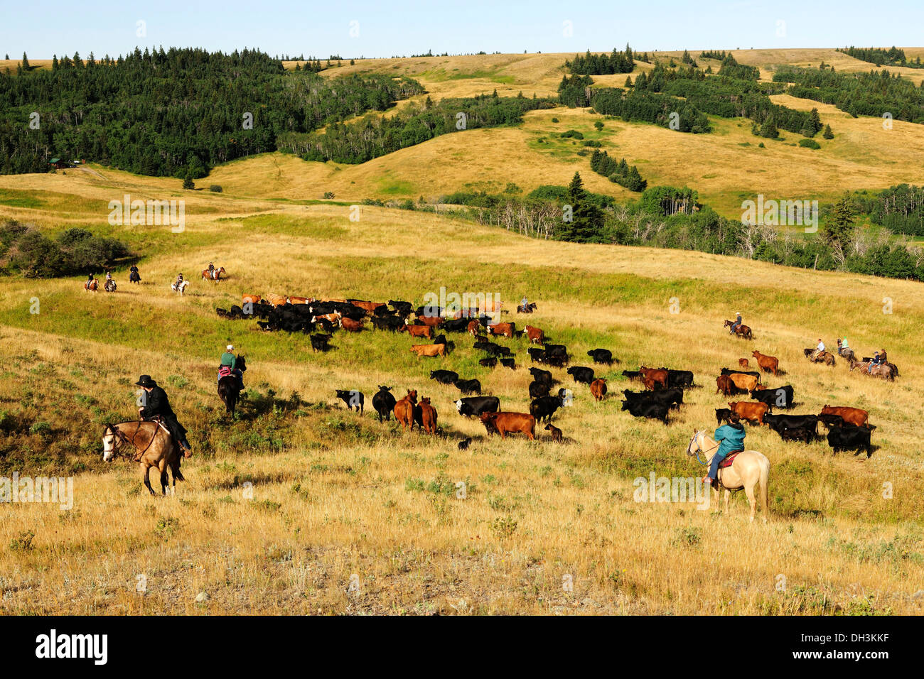 Image result for COWGIRLS AND CATTLE