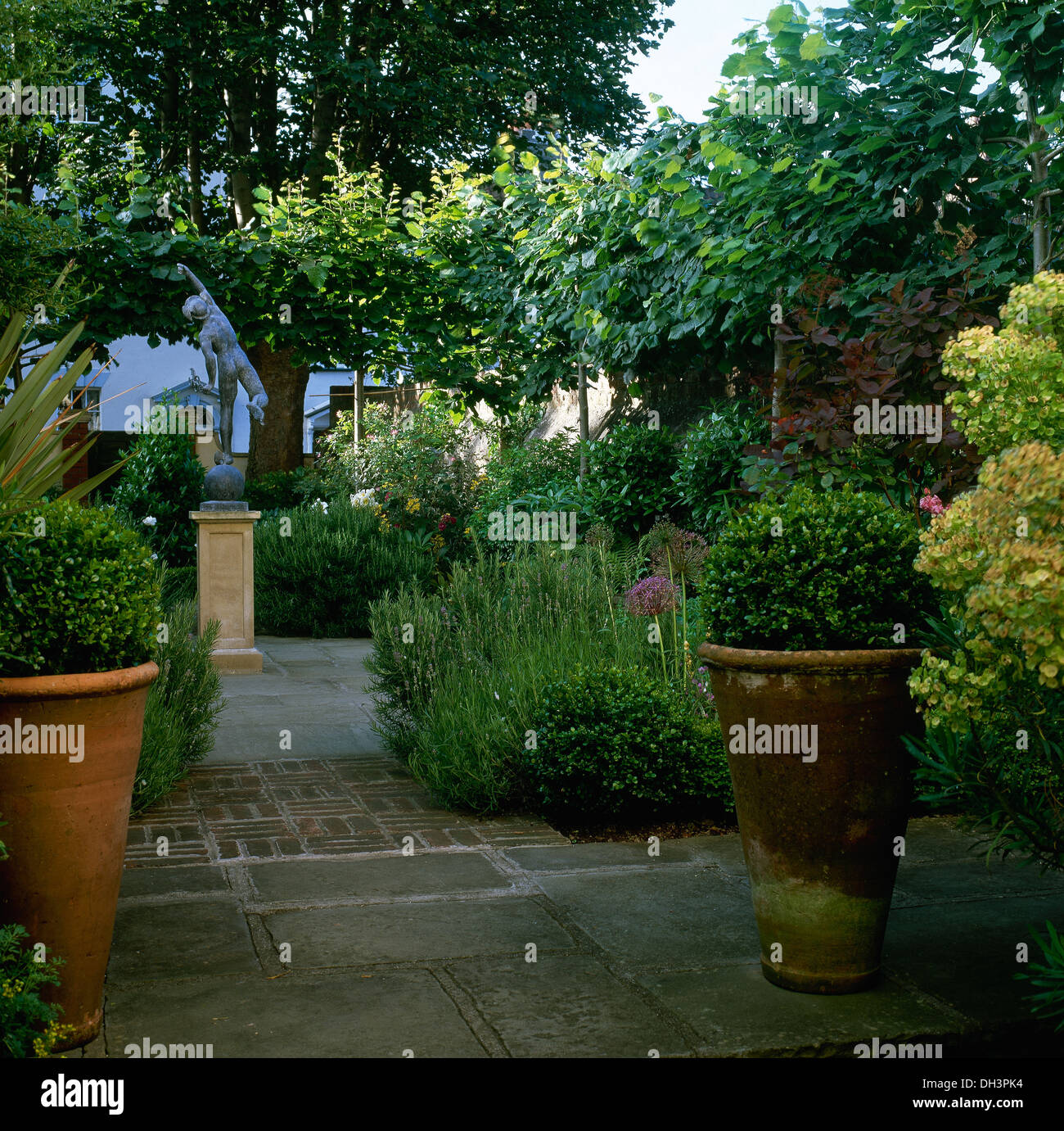 Clipped Box In Large Terracotta Pots On Paving In Lush Green Garden With  Small Trees In