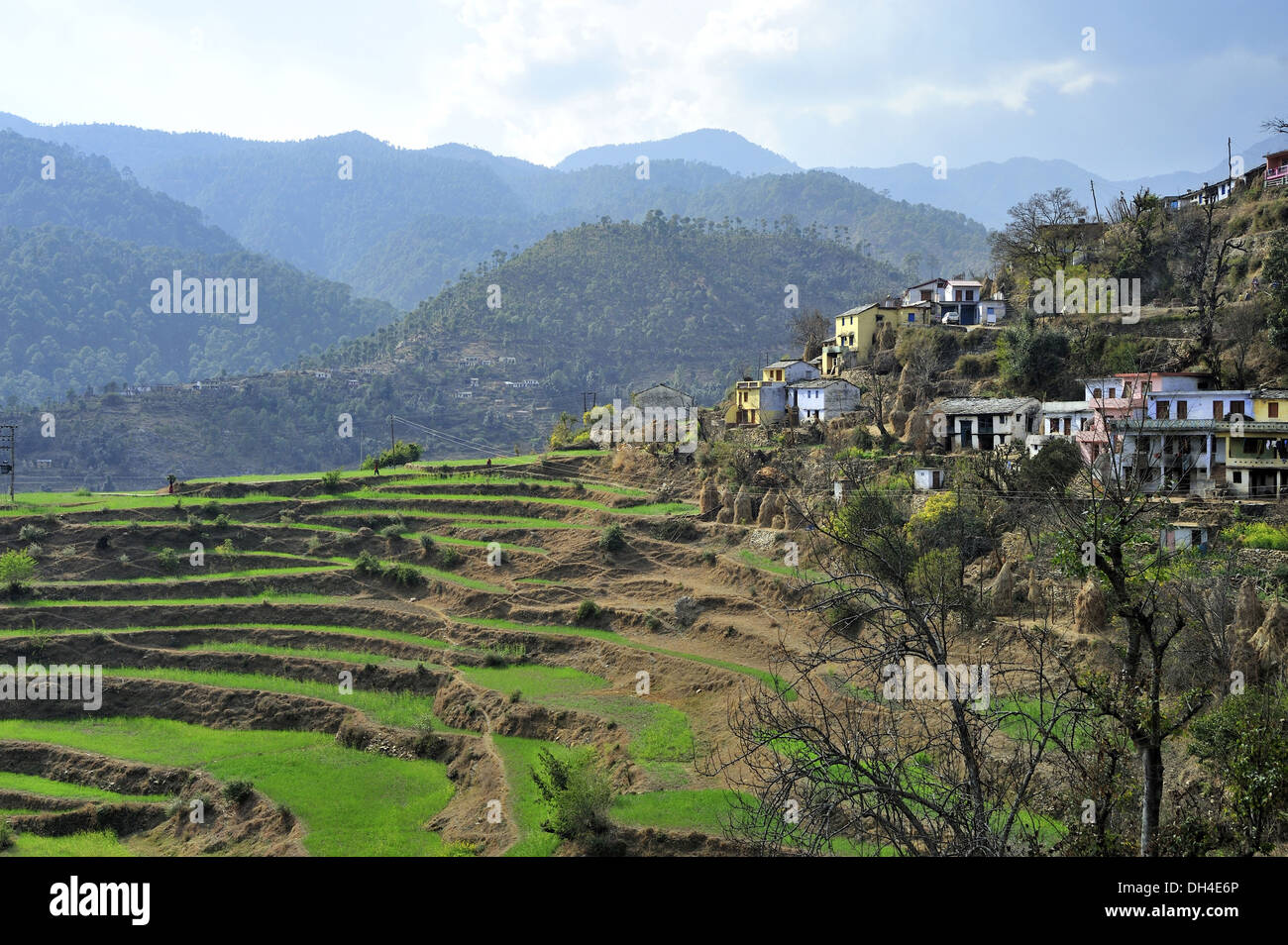 Terrace farming and bijuriya village bageshwar uttarakhand for Terrace 6 indore