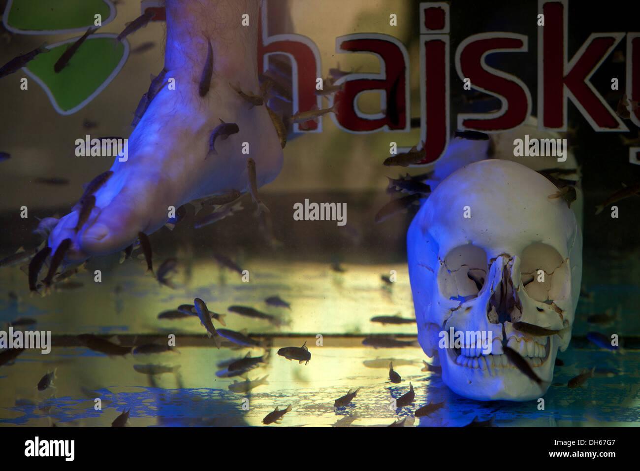 Fish spa pedicure in shop window street prague czech for Garra rufa fish pedicure locations