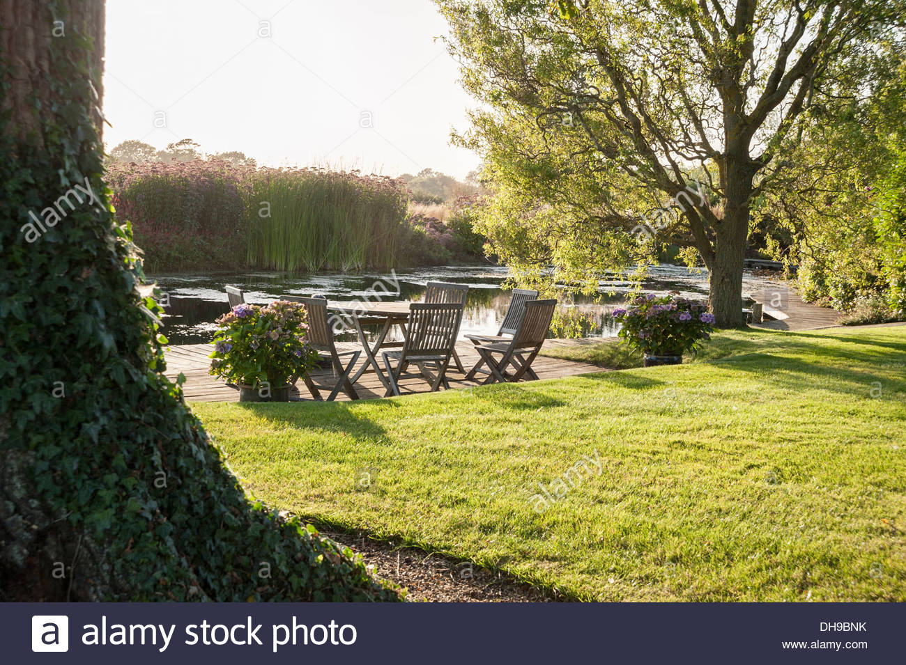 Seating Area On Decking Beside The Large Pond Framed By Corkscrew Willow Salix Matsudana Tortuosa Private Garden SusUk