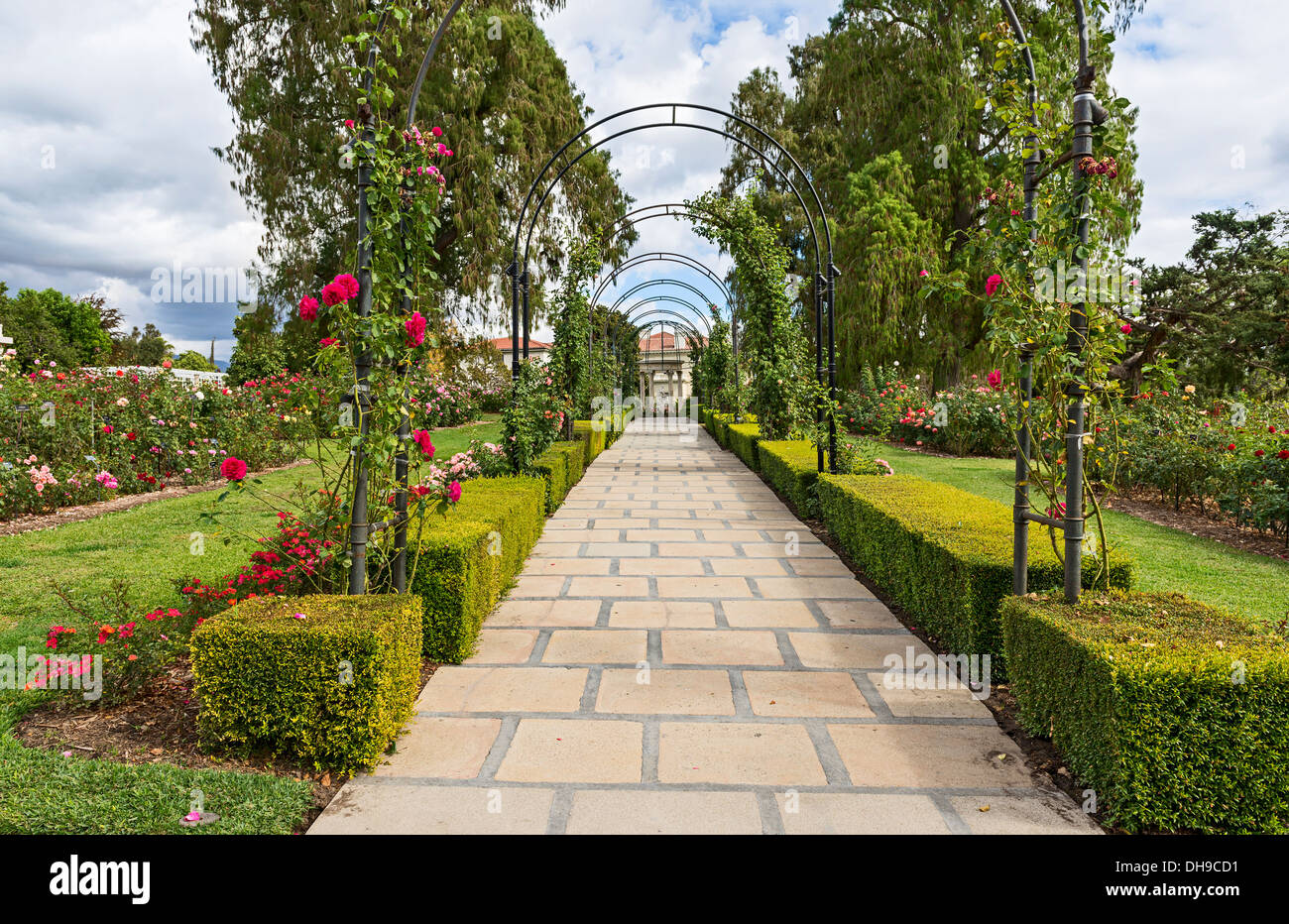 Beautiful Rose Garden Of The Huntington Library Stock