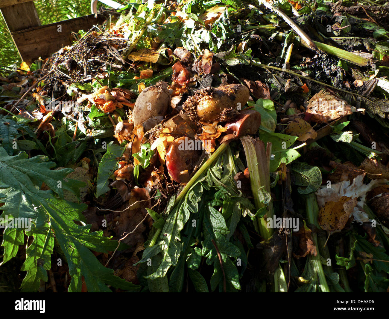 vegetable organic kitchen waste in a composting bin in the garden in autumn dyfed wales uk kathy dewitt
