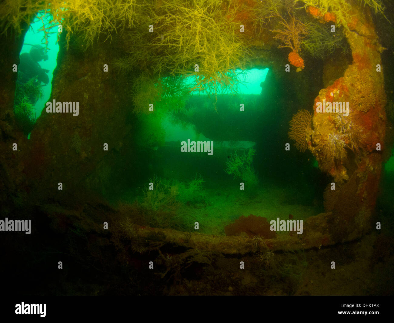 underwater mexico la paz scuba diving ocean sea sea of