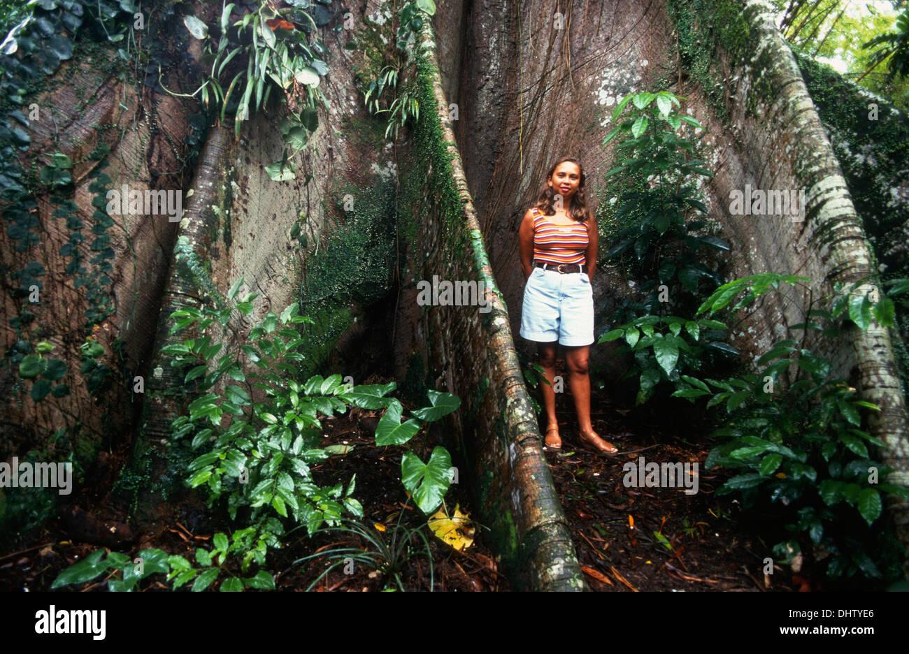 huge tree, amazon rainforest, belem, state of para, amazon ...