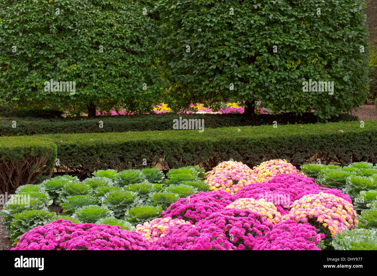 border plants bedding plants stock photos  border plants bedding, Beautiful flower