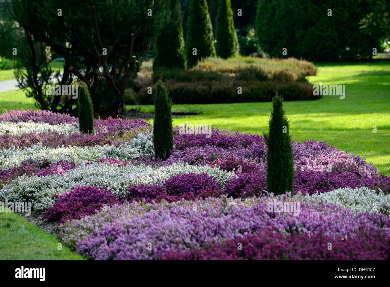 Erica Carnea heather white flower garden plant winter spring low – Plants for Winter Garden