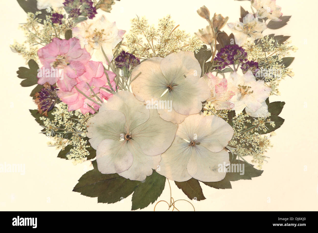 Dried Pressed Flowers In Frame Stock Royalty Free Image Alamy