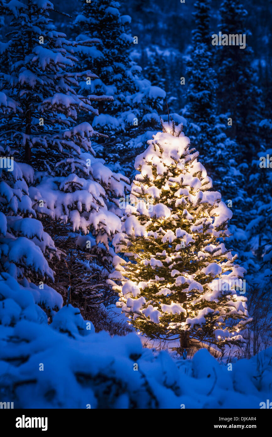 lit christmas tree in snow covered forest of spruce trees. Black Bedroom Furniture Sets. Home Design Ideas