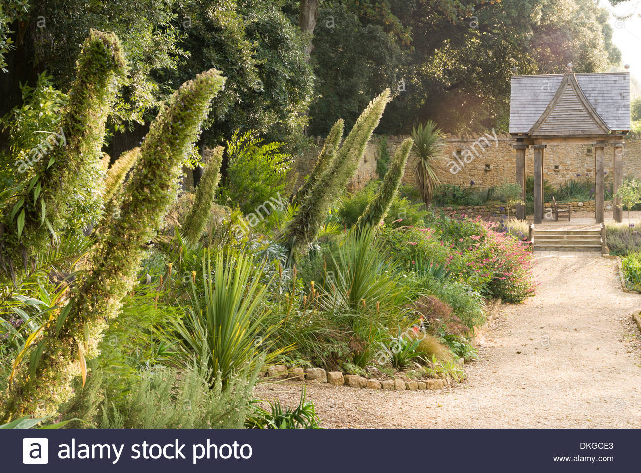 Good Mixed Border With The Pavilion As Focal Point, With Tall Echium Pininiana  And Other Tender Plants. Abbotsbury Subtropical Garden