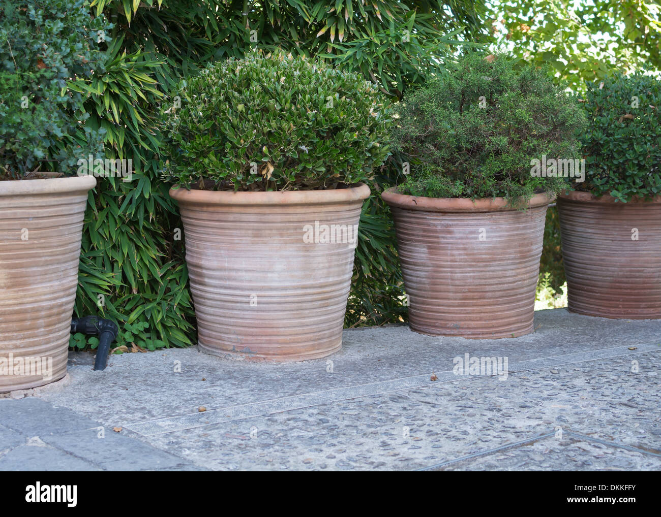 Attractive Four Large Terracotta Pots With Green Round Plants. Majorca, Balearic  Islands, Spain.