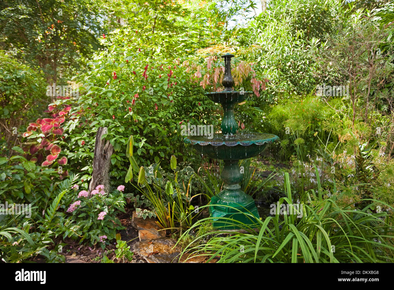 spectacular lush sub-tropical garden with decorative fountain