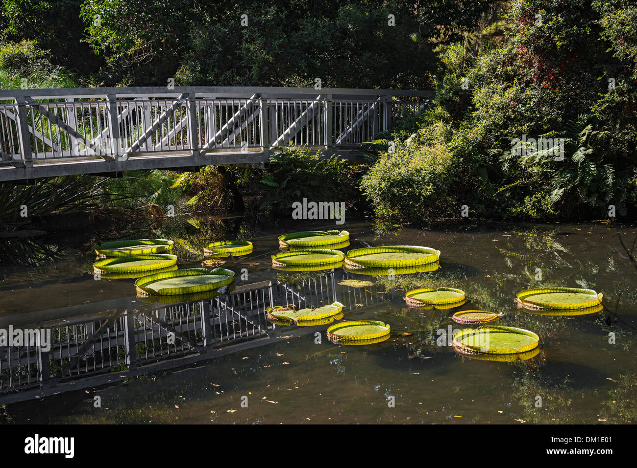 Kanapaha botanical gardens gainesville florida stock photo - Botanical gardens gainesville fl ...