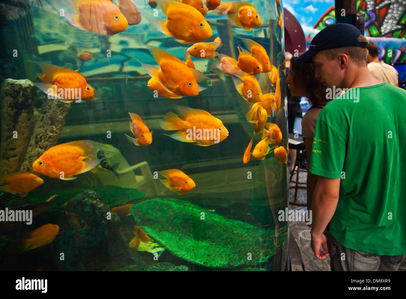 Freshwater Aquarium Fish In Dubai -  visitors enjoy viewing tropical fish at the rayong aquarium rayong thailand stock photo