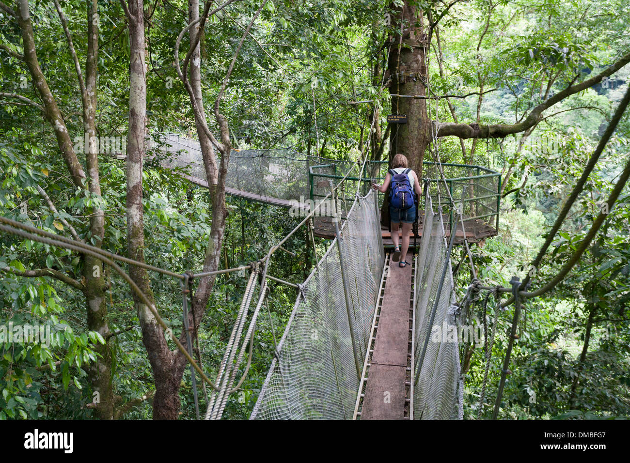A woman walks along one of the suspended walkways in the forest canopy at the Rainmaker Conservation Project Costa Rica : canopy walks - memphite.com