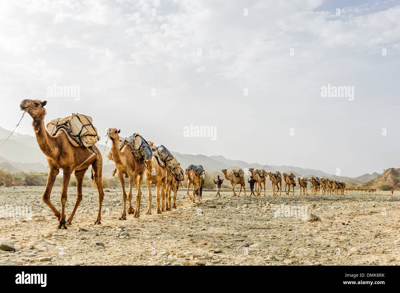 Brilliant Sahara Desert Caravan Camel Caravan In Libyan Desert