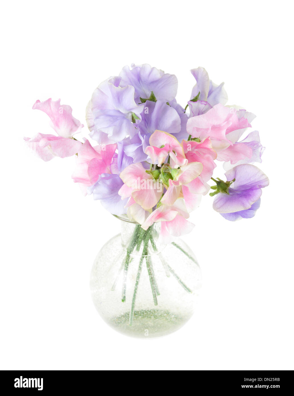 Clear glass vase with arrangement of sweet peas flowers isloated clear glass vase with arrangement of sweet peas flowers isloated on white with shallow depth of field reviewsmspy