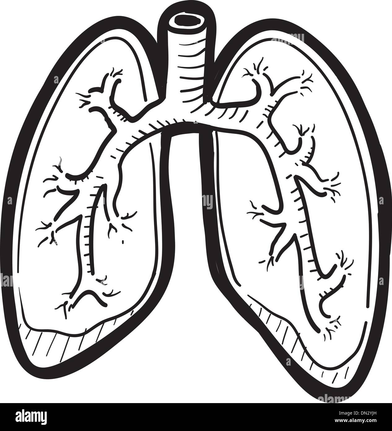 Human Lung Sketch Stock Vector Art U0026 Illustration Vector Image 64604473 - Alamy